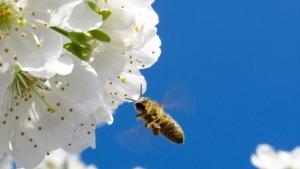 chez-les-abeilles